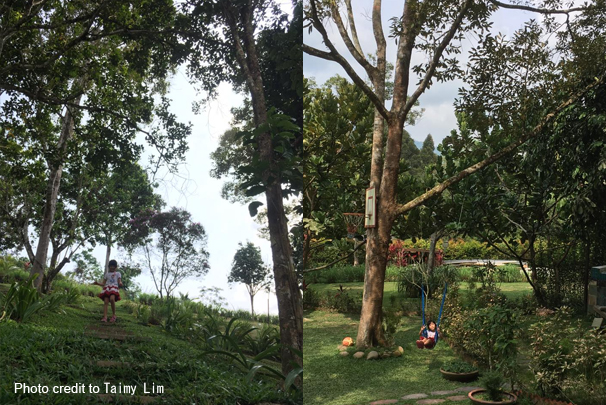 Janda_baik_Laman Tahza_campsite_malaysia_car_camping_23