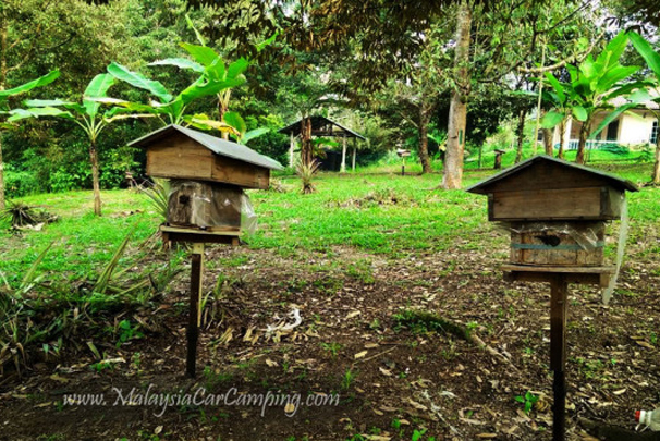 Their small bees farm just next to the durians trees.