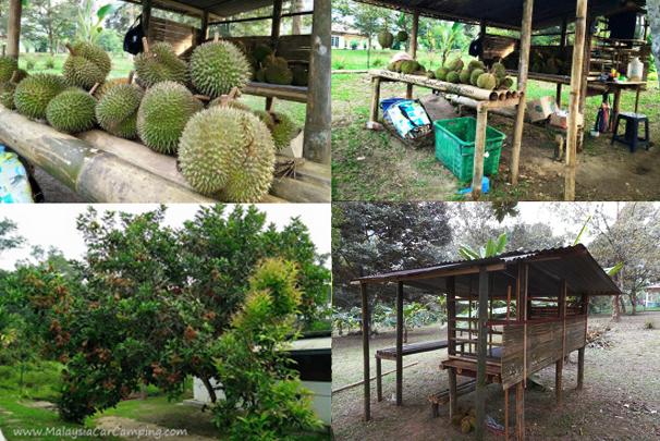 Do come here at durian season