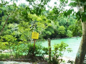 teluk-bahang-taman-negara-penang-car-camping-malaysia-61