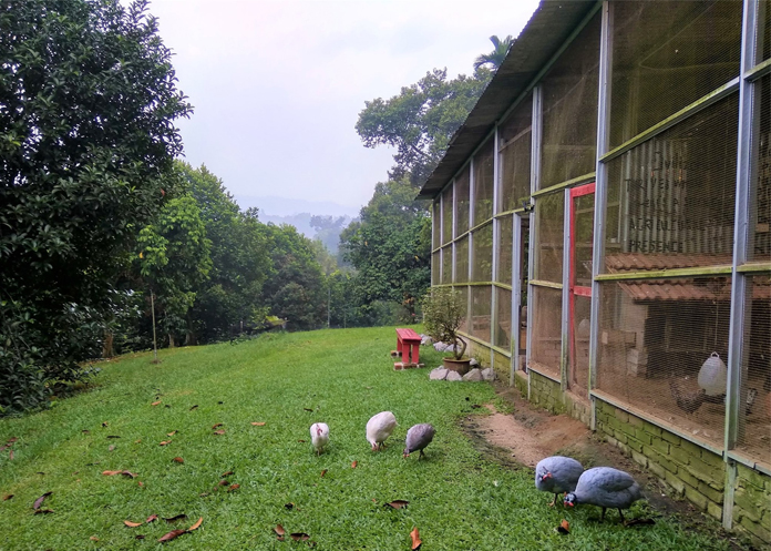 Aman Dusun Farm Retreat