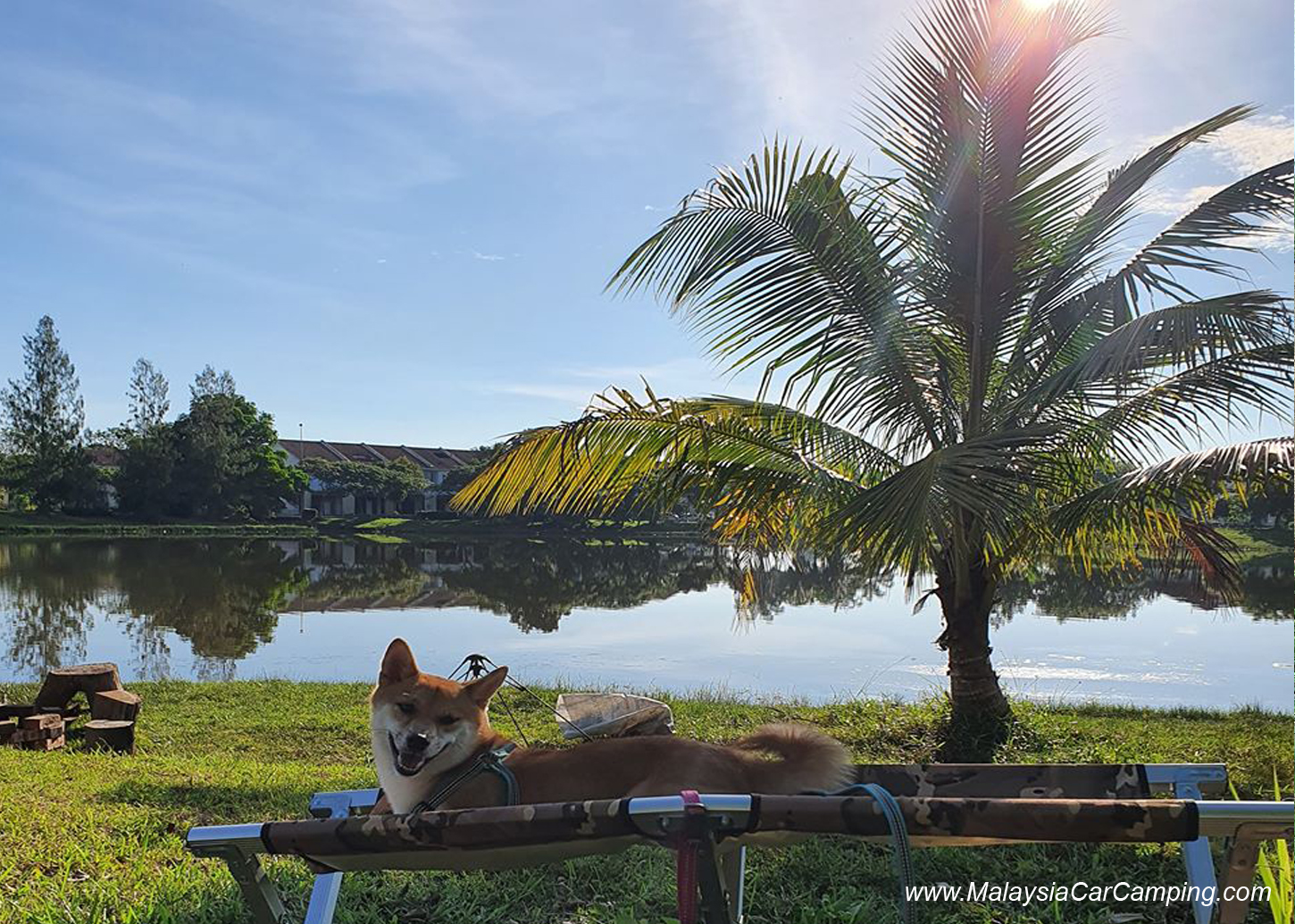 camping_with_dogs_puppy_lakeside_camping_malaysia_car_camping_malaysia_campsite-16