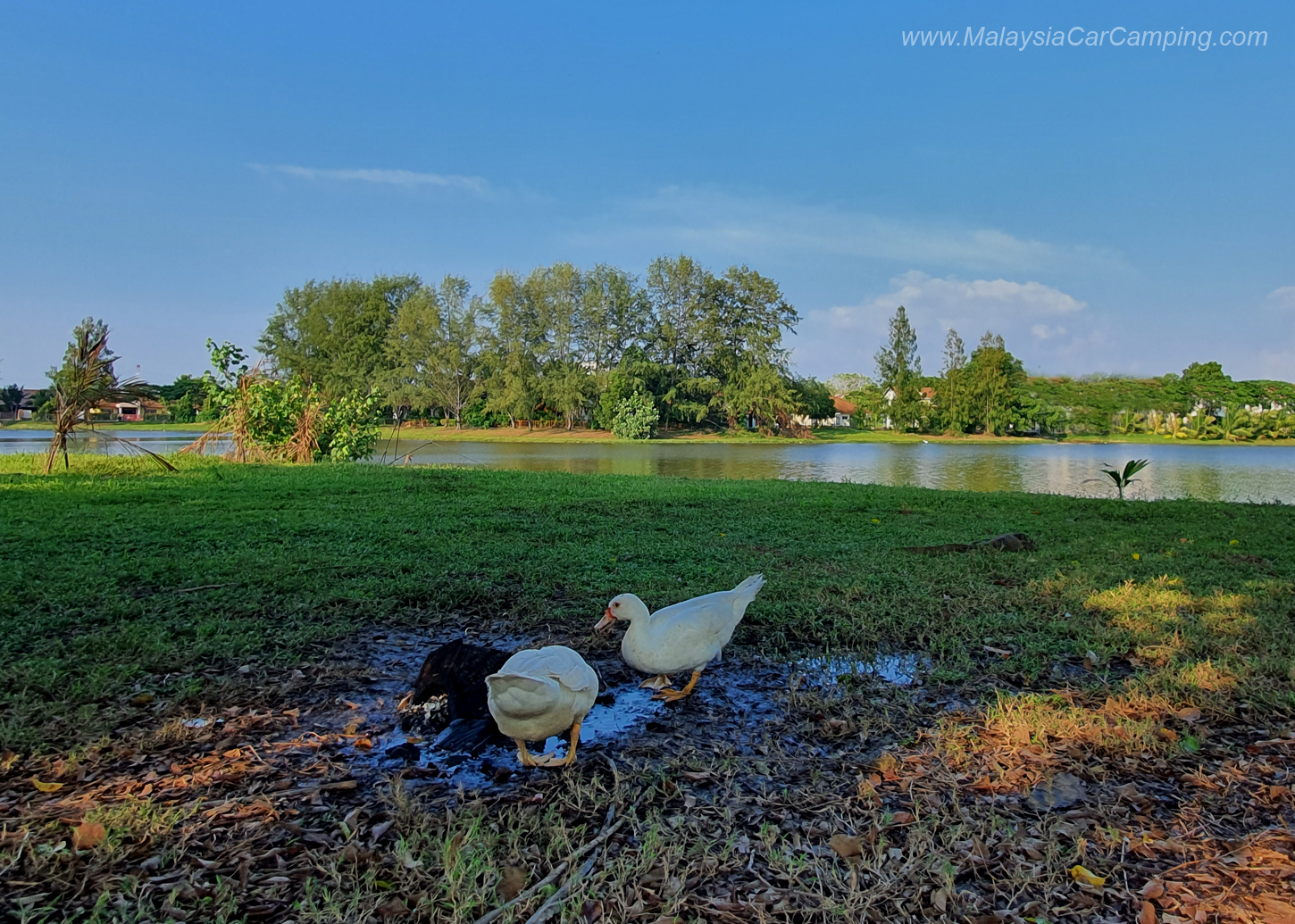 camping_with_dogs_puppy_lakeside_camping_malaysia_car_camping_malaysia_campsite-3