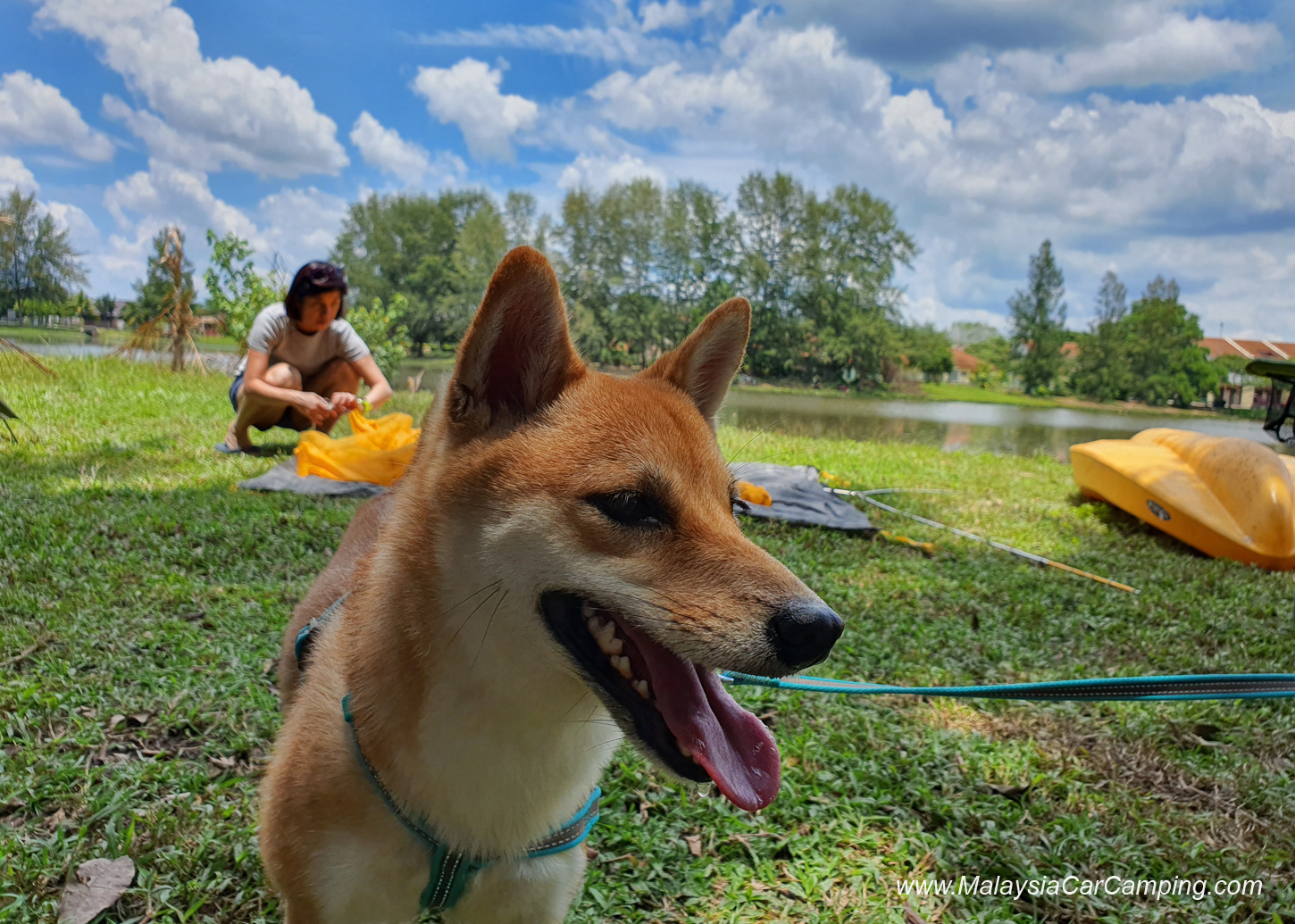 camping_with_dogs_puppy_lakeside_camping_malaysia_car_camping_malaysia_campsite-4