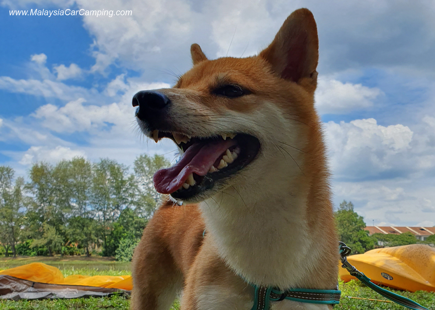 camping_with_dogs_puppy_lakeside_camping_malaysia_car_camping_malaysia_campsite-7