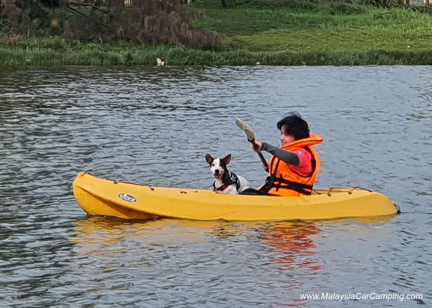 kayak_with_dogs_camping_with_dogs_puppy_lakeside_camping_malaysia_car_camping_malaysia_campsite-2