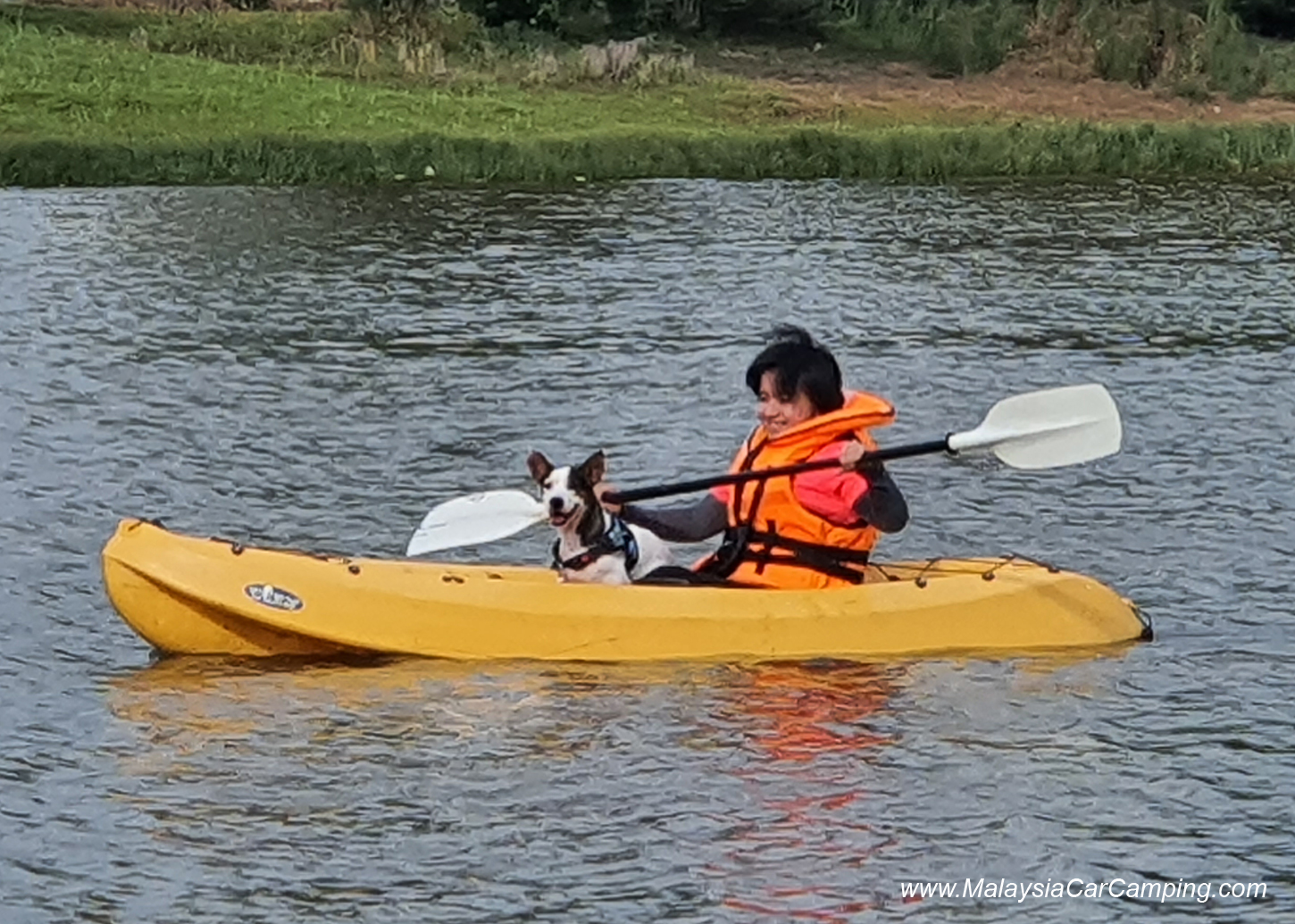 kayak_with_dogs_camping_with_dogs_puppy_lakeside_camping_malaysia_car_camping_malaysia_campsite-3