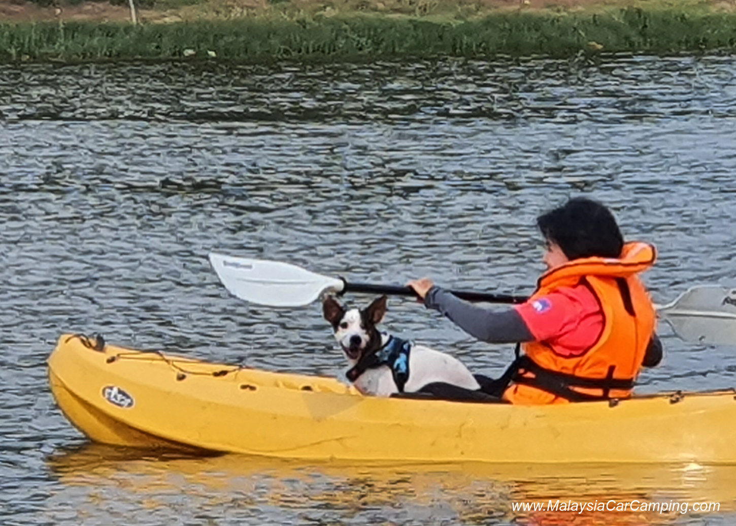 kayak_with_dogs_camping_with_dogs_puppy_lakeside_camping_malaysia_car_camping_malaysia_campsite-4
