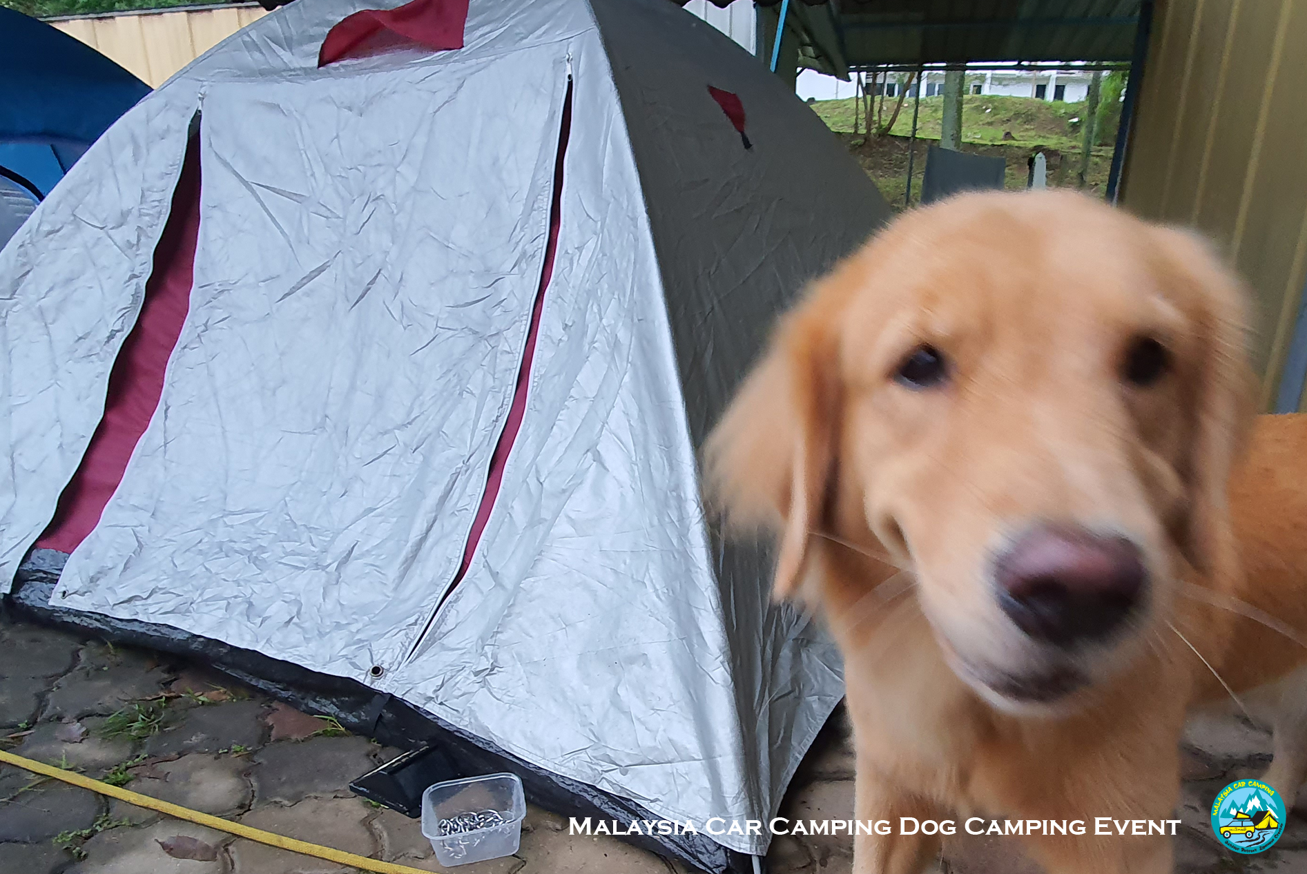 dog_camping_event_dog_lover_selangor_camping_site_malaysia_car_camping_private_event_organizer-3