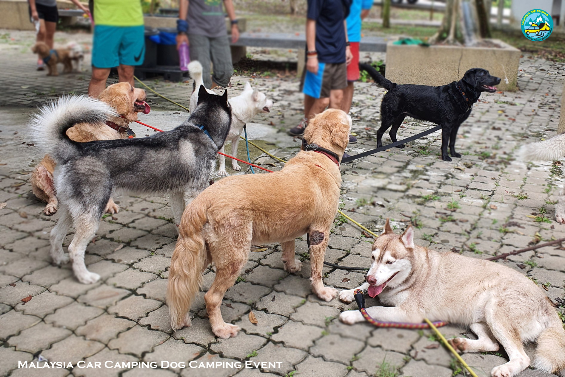 dog_camping_event_dog_lover_selangor_camping_site_malaysia_car_camping_private_event_organizer-9