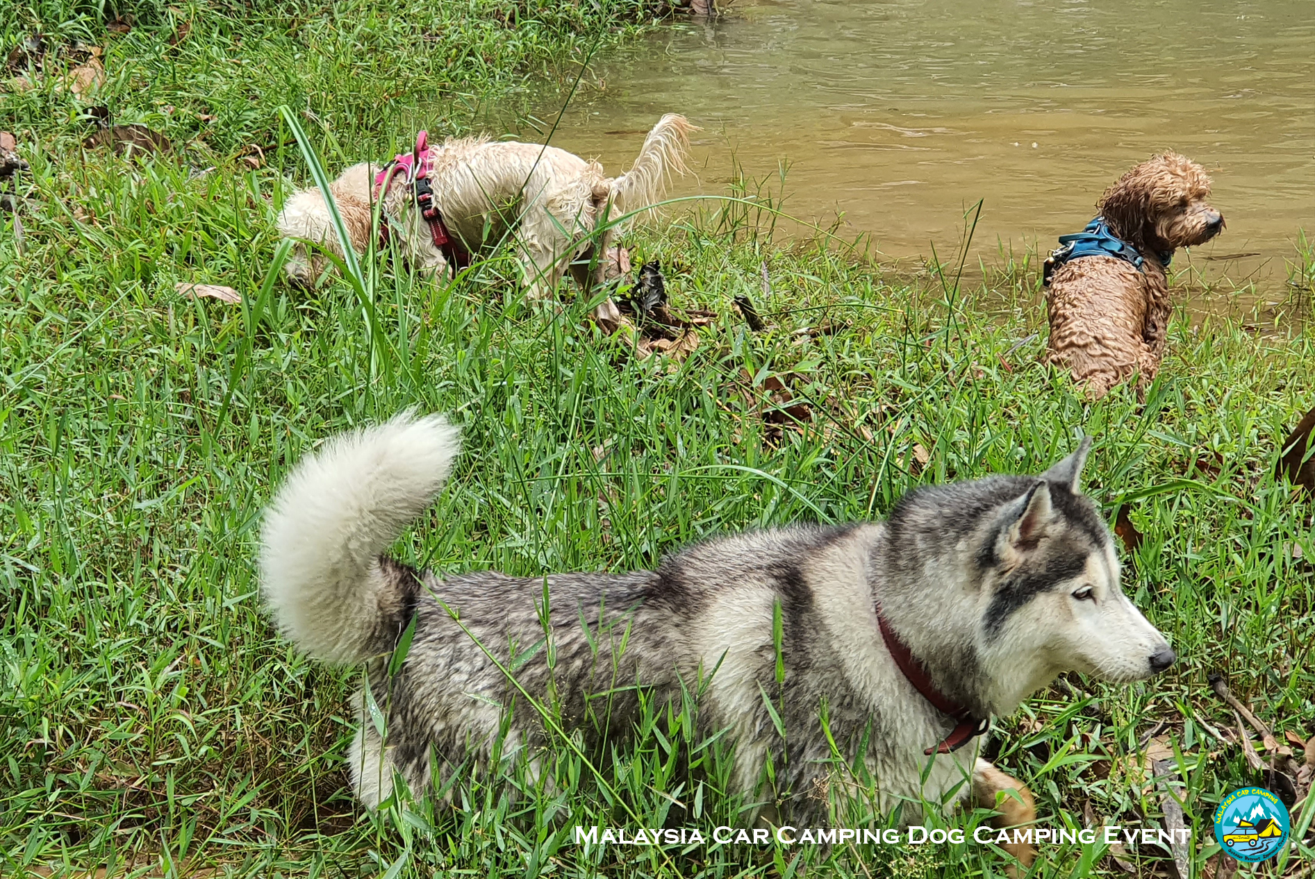 hiking_with_dog_malaysia_dog_camping_event_selangor_camping_site_malaysia_car_camping_private_event_organizer-4